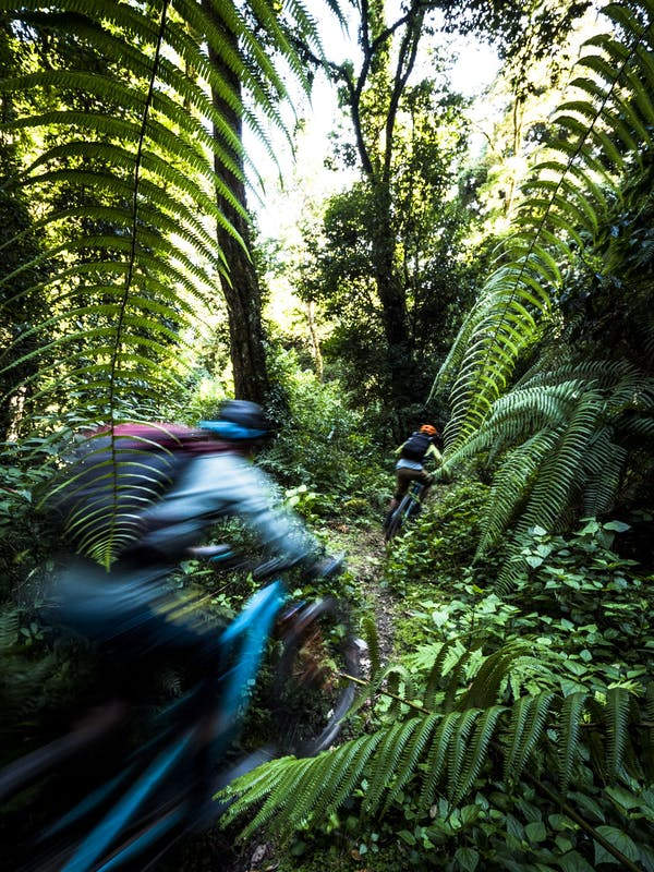 Two riders dart through a lush forest