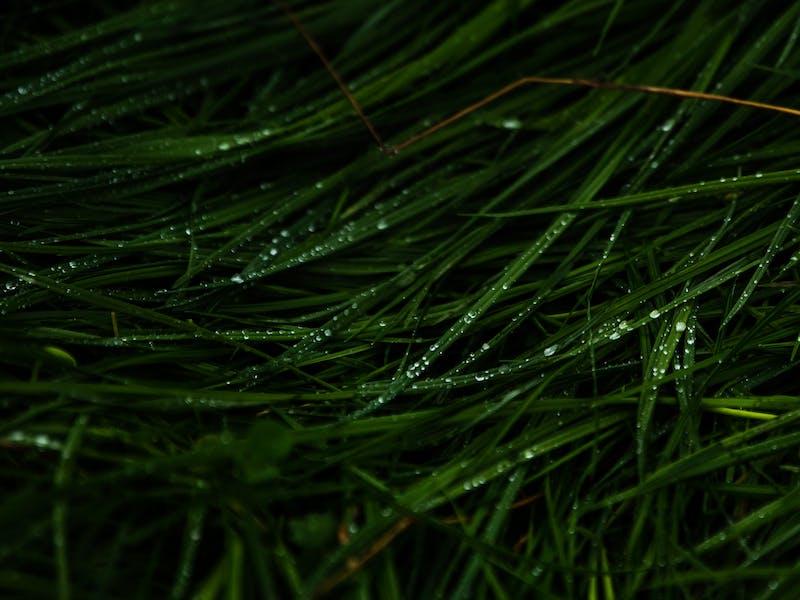 EWS 9 Tweed Valley - Grass