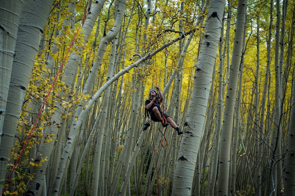 Joey Schusler dangling from a rope high in aspen trees
