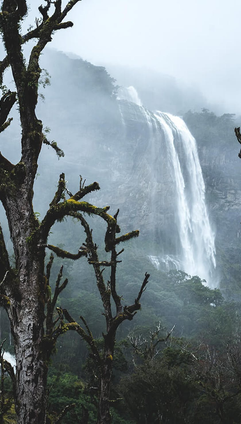 Moss covered trees and fog frame a distant waterfall in the background