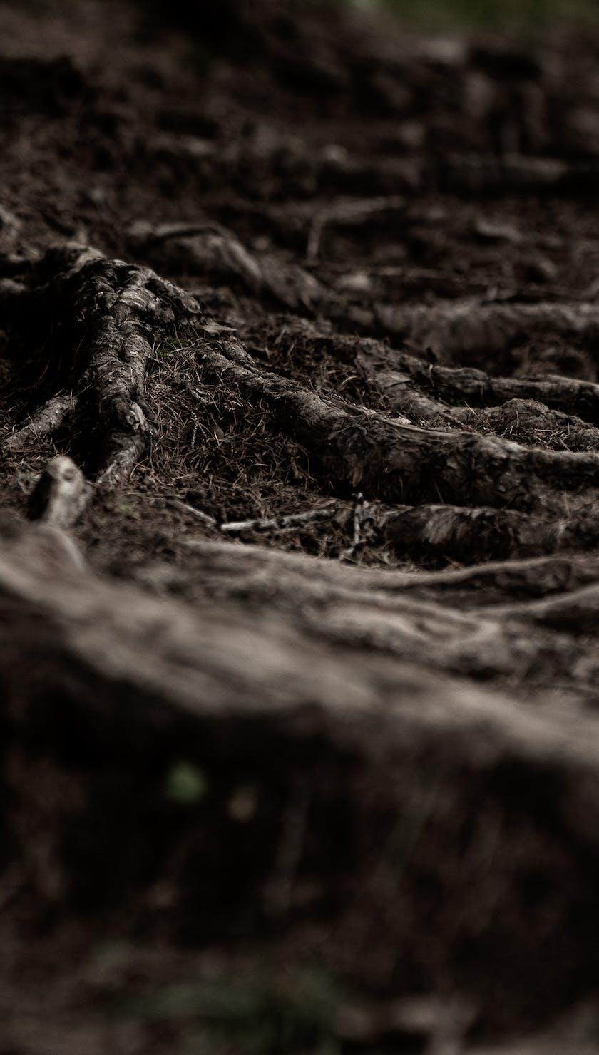 EWS '21 Crans Montana - Roots