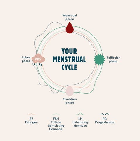 Full Menstrual Cycle Phases Diagram