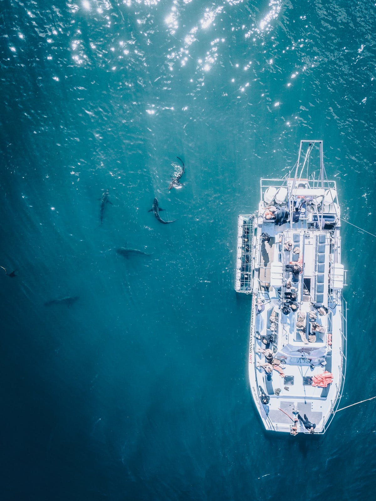 Seen from a drone, a pleasure boat with in the sea, a group of sharks -Photo by Clayton Cardinalli on Unsplash