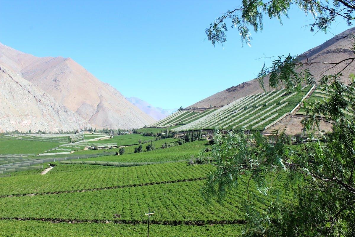 Vallée de vignes vertes à côté de montagnes