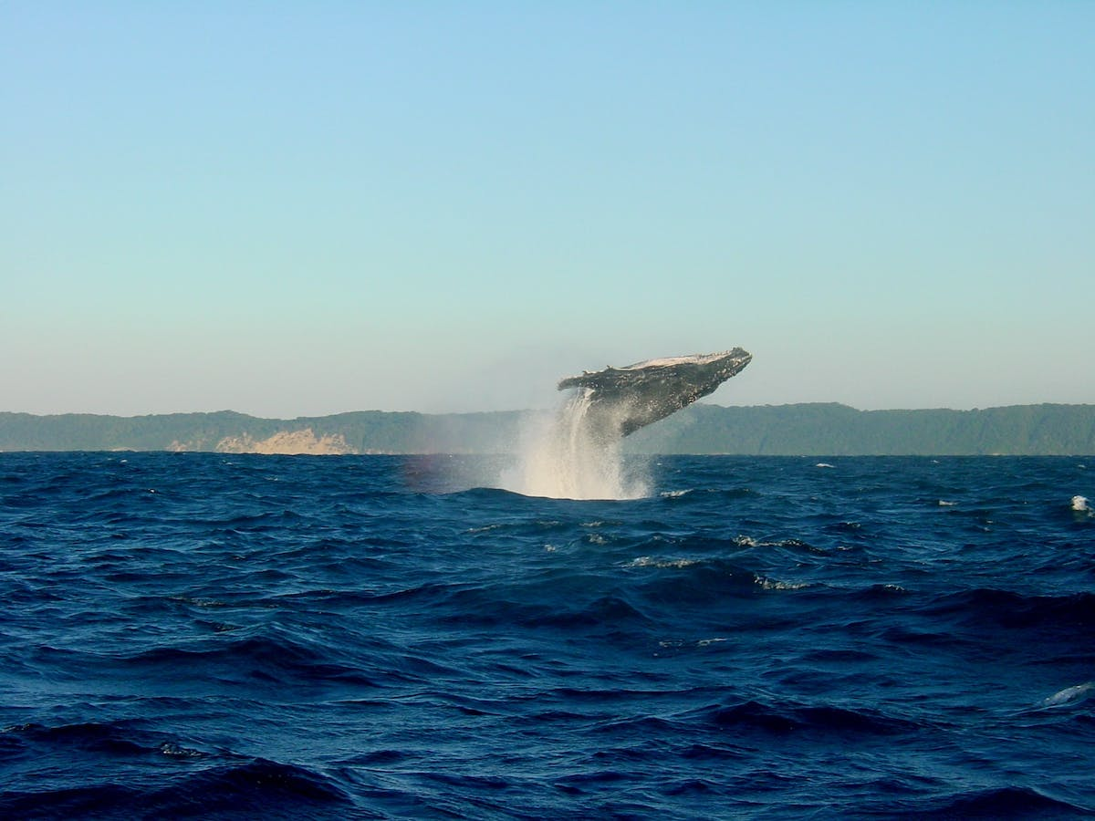 A whale making an impressive jump into Hermanus Bay in South Africa - Image by Jens Teichmann from Pixabay
