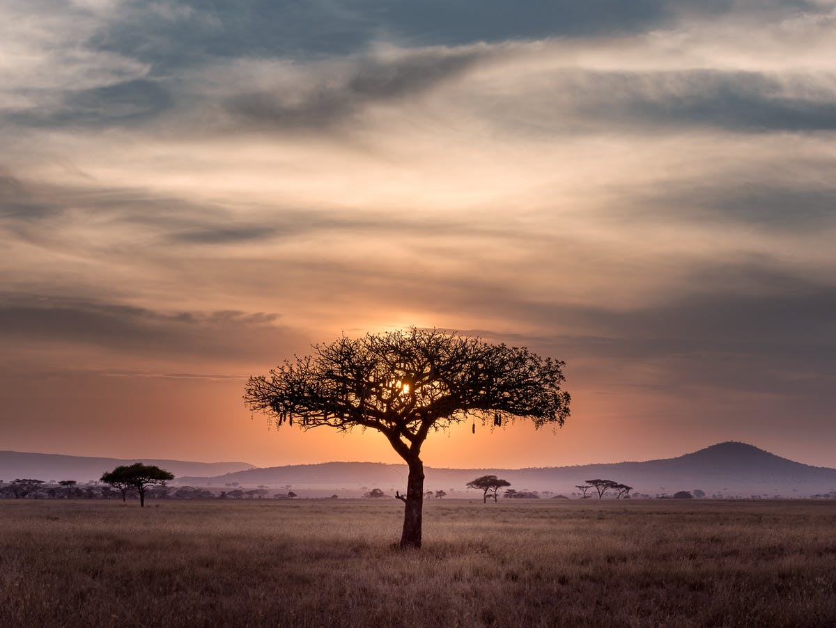 View of the Kruger Park at sunset on an acacia parasol with wildlife in the background - Picture: HU CHEN- on Unsplash