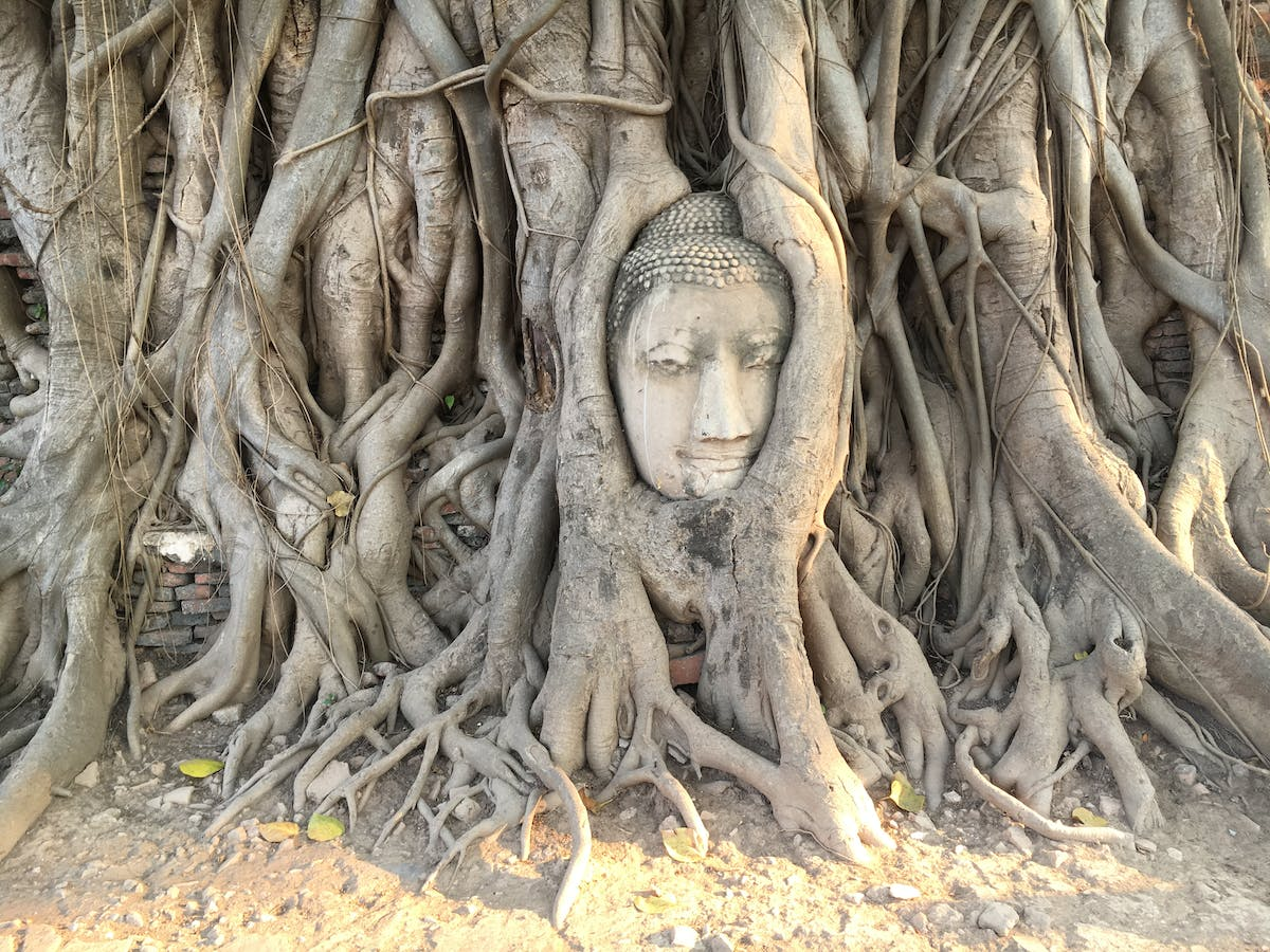 Buddha head entangled in tree roots - Image by unserekleinemaus from Pixabay