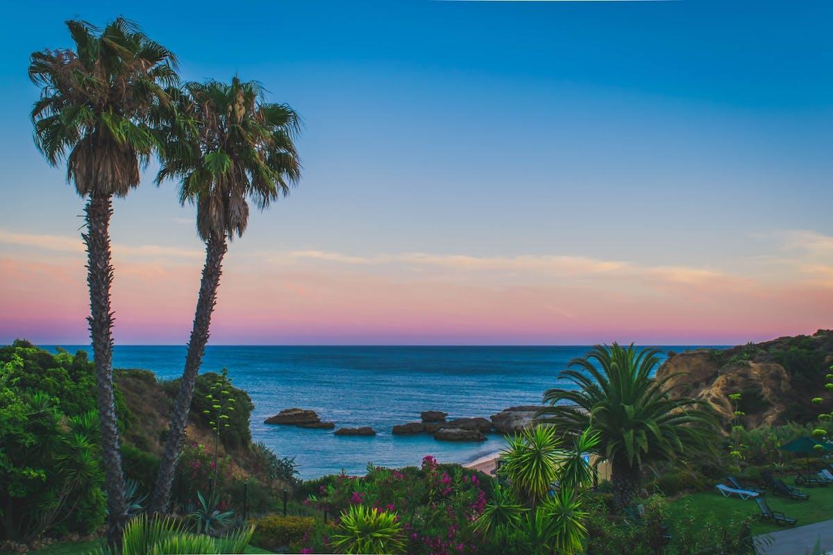 Vue sur l'ocean, la plage et des palmiers