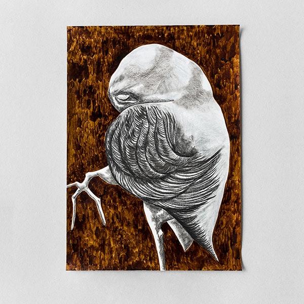 Bird cell n° 5